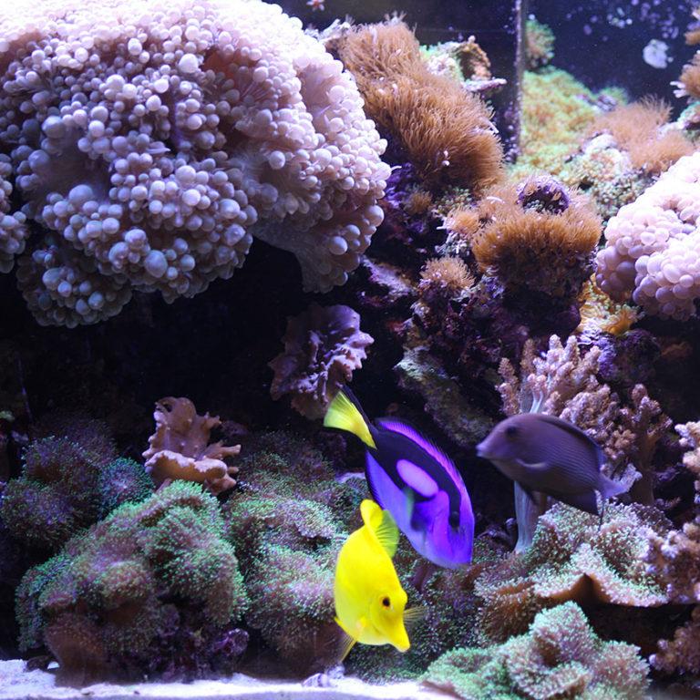 Reefer 450 – Aquarium marin